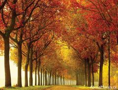 A wall mural featuring a street lined with red and gold autumn trees