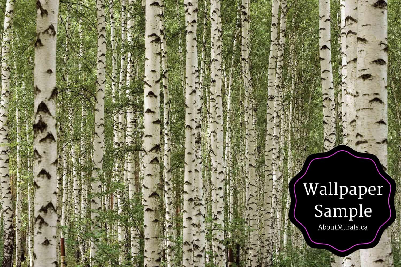 A Wallpaper Sample Of Green Birch Tree