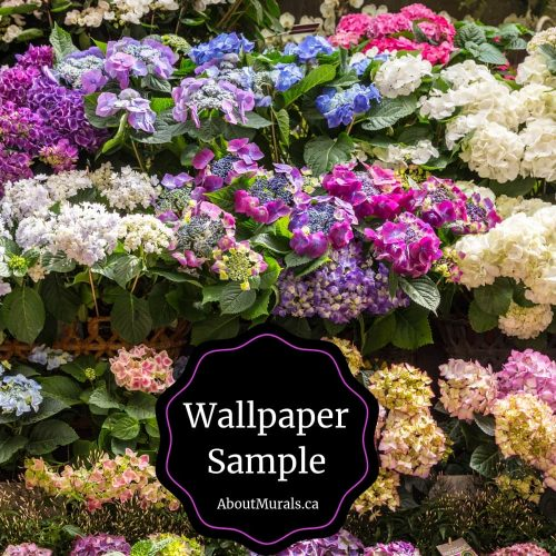 Hydrangea wallpaper sample available from AboutMurals.ca