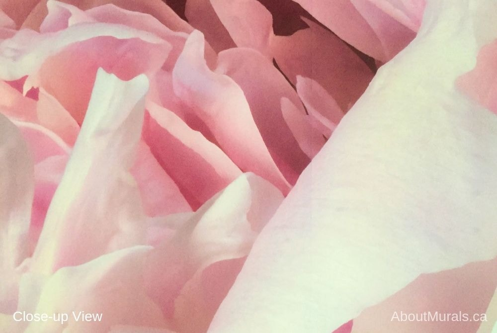 A closeup photo of pink peony wallpaper sold by AboutMurals.ca