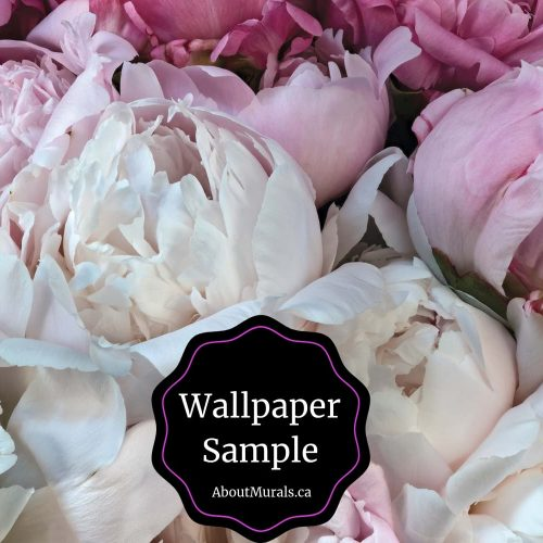 Peony Wallpaper Sample available from AboutMurals.ca to see the soft pink colours of these flowers in person.